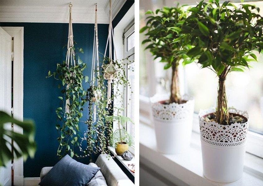 aarredare con le piante