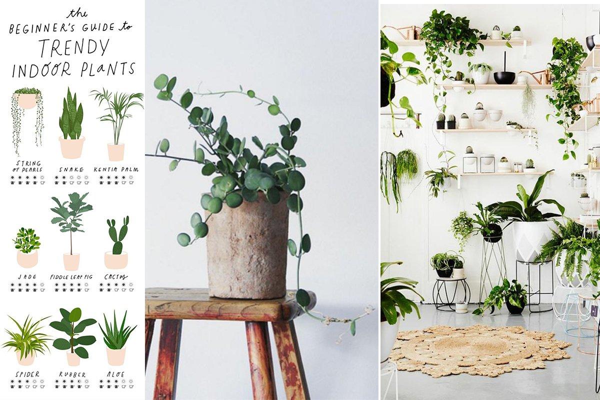 arredare con le piante idee
